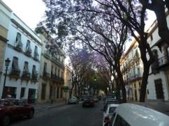Tree lined street Jerez