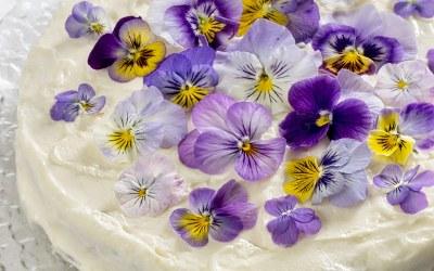 Burkānkūka ar pavasara ziediem