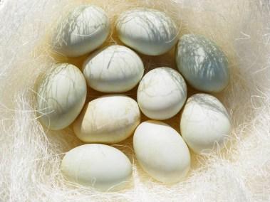 Pīļu olas