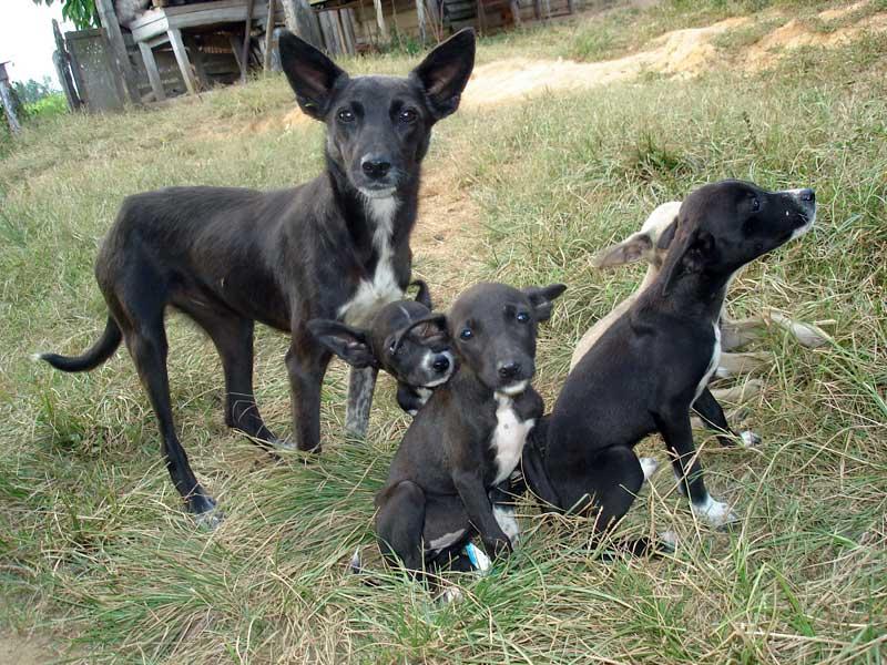 Hundstage im August