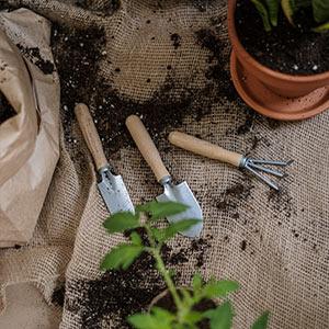 Essbare Gartengestaltung: Blumen mit Gemüse und Kräutern kombinieren