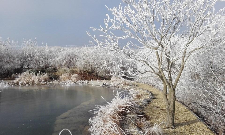 winter-teich