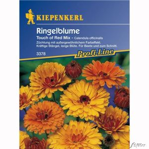 Ringelblumen 'Touch of Red Mix'