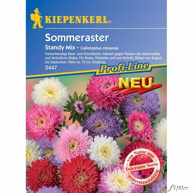 Sommeraster 'Standy Mix'