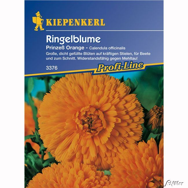 Ringelblumen 'Prinzeß Orange'