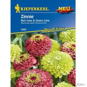 Zinnie 'Red Lime' & 'Green Lime'