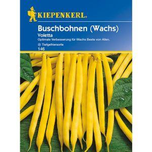 Buschbohne (Wachs) 'Voletta'