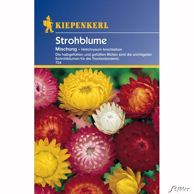 Strohblumen-Mischung