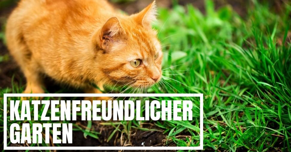 Katzenfreundlicher Garten Gartenschule