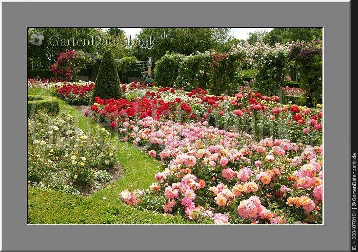 Rosengarten Im Britzer Garten Ehem Bugapark Roseng 228 Rten