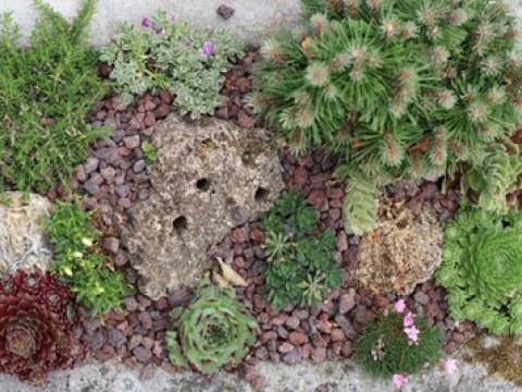 pflanzen für steingarten schöne steingartenpflanzen - winterharte sorten für sonne