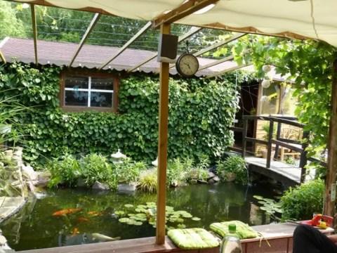 terrasse am teich teich anlegen – tipps zu planung, bepflanzung und mehr