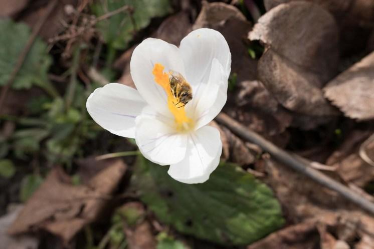 Fruehling-im-Garten-03-2018_DSCF7175_1