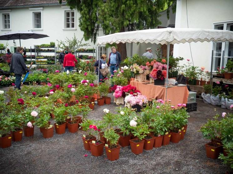 Gartenlust-Lackenbach-2020-p6050066
