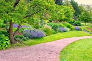 Lavendel im Garten » Sorten, Standortwahl und Pflegehinweise