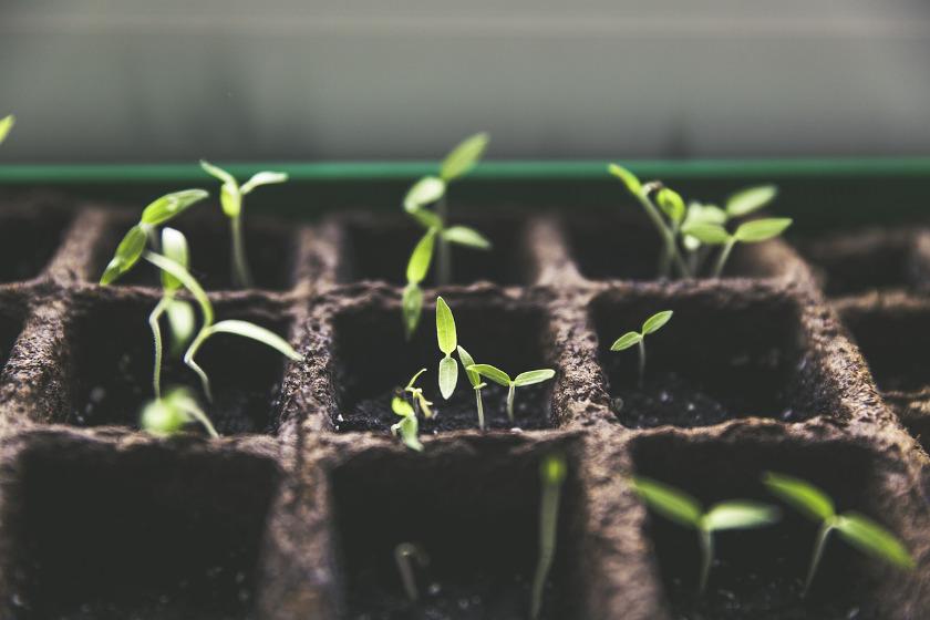 Pflanzenlampe für den Garten