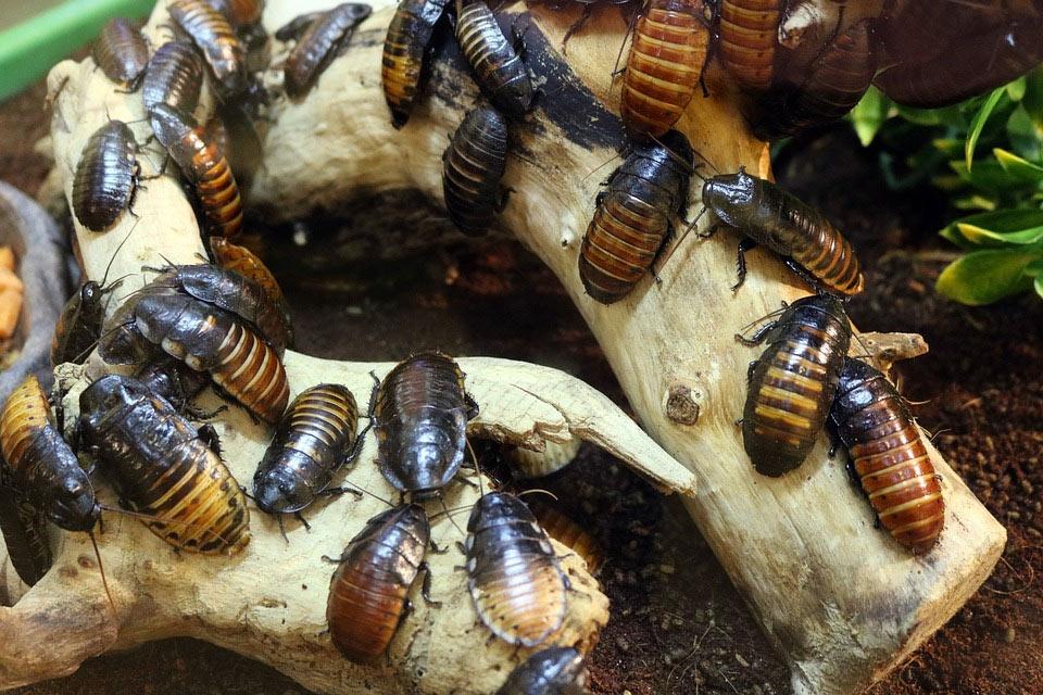 Insektenvernichtung