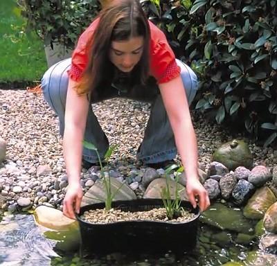 teichbau leicht gemacht teichbau teichbepflanzung pflanzkorb