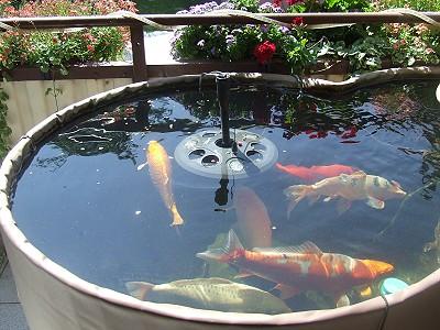 Vom koi miniteich auf dem balkon zum klassischen for Kois und goldfische in einem teich
