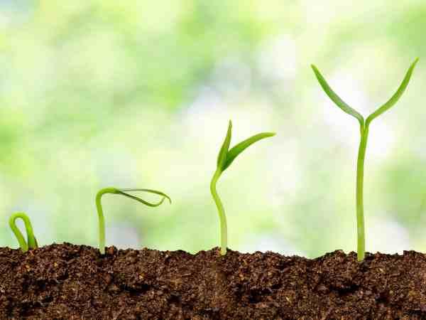 Plants growing from soil – Plant progress
