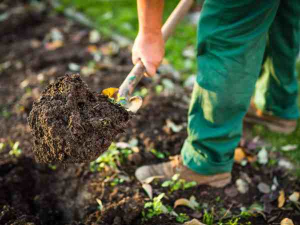 Gardening – man digging the garden soil with a spud (shallow DOF; selective focus)