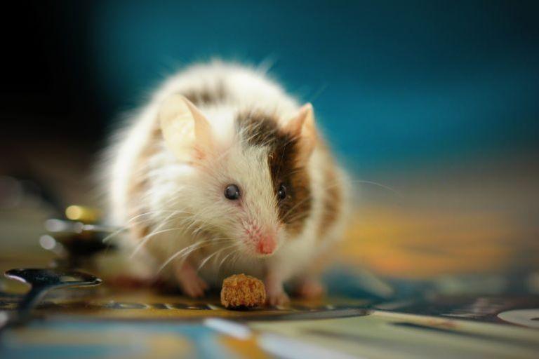 Mäuseschreck-2