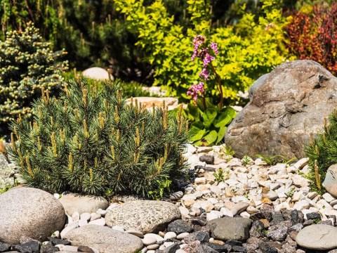 pflanzen für steingarten steingarten anlegen -  moderne ideen mit bildern