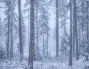 Mt Hood National Forest Oregon