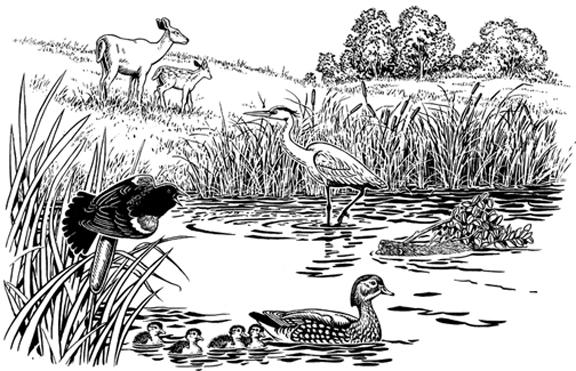 blackbird, duck, heron and deer