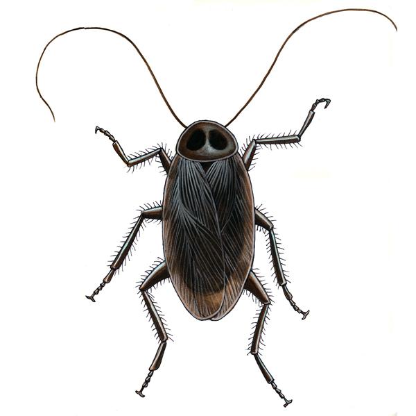 Cockroach. Gouache. Gary Whitley.