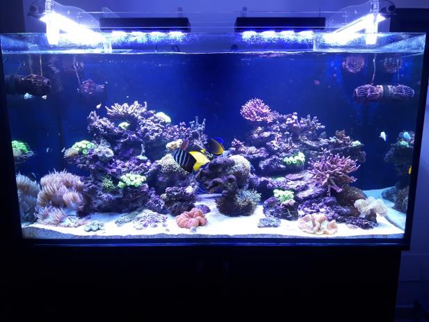 Plafoniera Led Acquario Marino 120 Cm : Il mio acquario marino di barriera g. a. s. gruppo acquariofilo