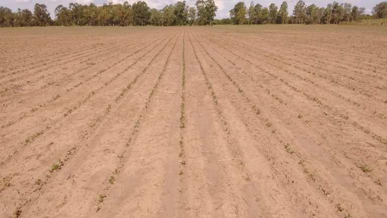 peanut crop evolution report