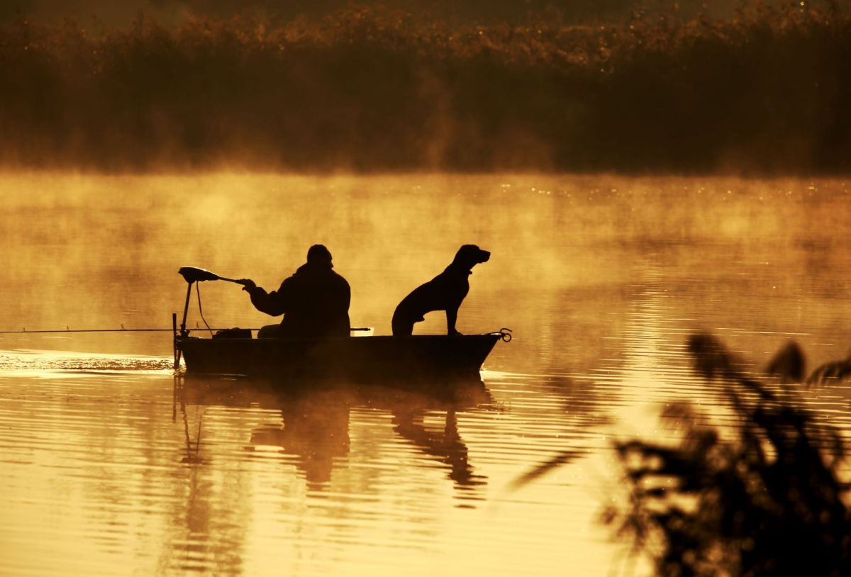 A fisherman rows his boat as his dog looks onward from the front of the watercraft.