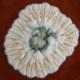 Penicillium camemberti