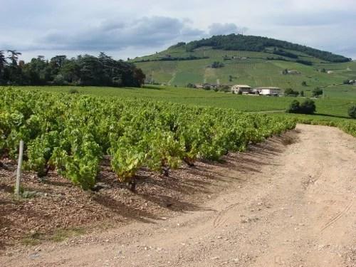 Vignoble de Brouilly et Mont-Brouilly