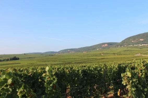 Vignoble Eichberg à Eguisheim