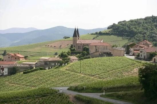 Vignoble et village de Morgon