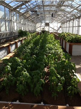 frog bench farms crops