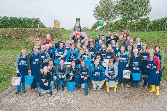 Charity-Weinlese Niederösterreich Weinherbst