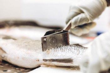 Auf Wunsch wird jeder Lieblingsfisch auch gleich vor Ort entschuppt und filetiert.