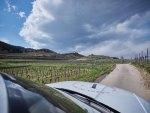 VINEUS Wine Award: Flüssige Fest-Werte