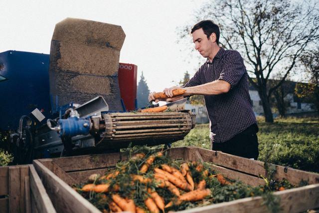 Frischkarotten Im Lutz'schen Betrieb werden für jede von Haubis Bestellungen Lagerkarotten aus ihren Erdkisten geholt, gewaschen, sortiert und entsprechend aufbereitet.