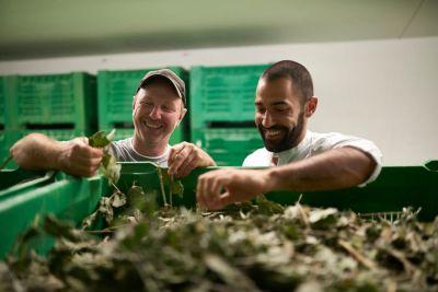 Hansjörg Oberdörfer (l.) und Axel Brunoni in der Trocknungsanlage, wo die Kräuter bereits ihr volles Aroma entfalten