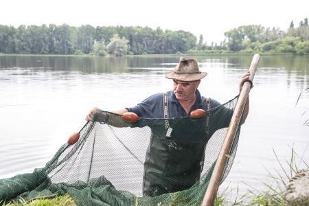 Biologisch bewirtschafte Naturteiche im nördlichen Waldviertel sind die Basis für die hohe Qualität der Fische