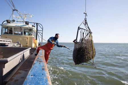 Gesunder Genuss Speisefische  Die holländischen Vonatur Austern und Bio-Miesmuscheln wachsen in planktonreichen Gewässern, in eigens angelegten Parzellen, nordwestlich von Antwerpen heran, bis sie ab Ende Juli aus dem Meer gefischt werden.