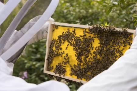 Metro unterstützt lokale Honig-Produktion