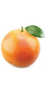 Grapefruit Citrus X paradisi