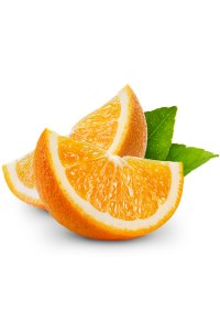 Wild Orange Citrus sinensis