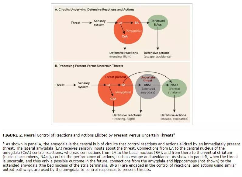 neural-circuits-for-present-versus-uncertain-threats