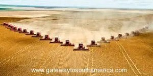 Soya Farming